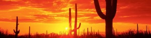 cropped-saguaronationalpark_arizona2.jpg